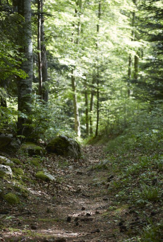chemin en forêt près d'Annecy