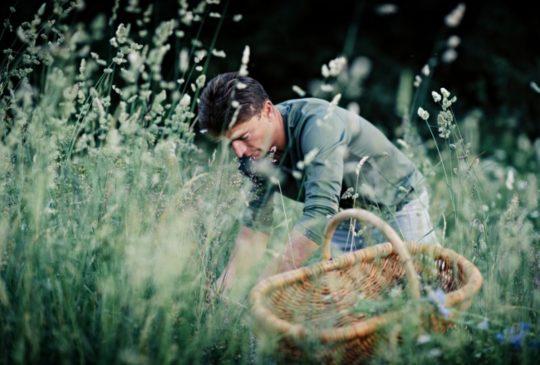 Chef étoilé Jean Sulpice cueille des herbes aromatiques