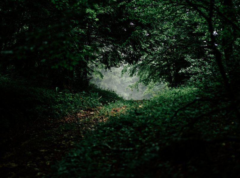 sous-bois en forêt